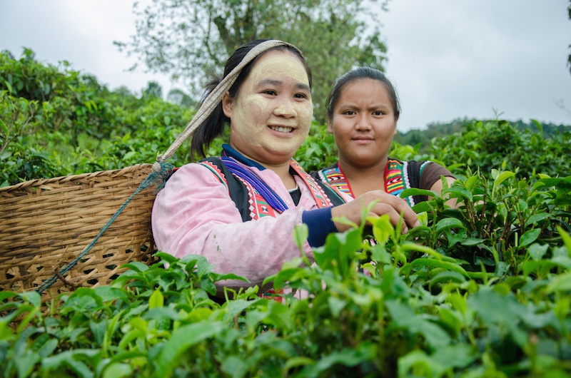 Happy Tea worker